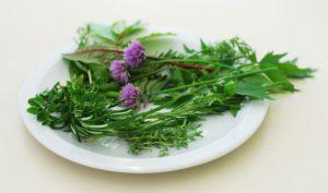 herbs-1323743-freeimages-com-Bura-PubDOm-web